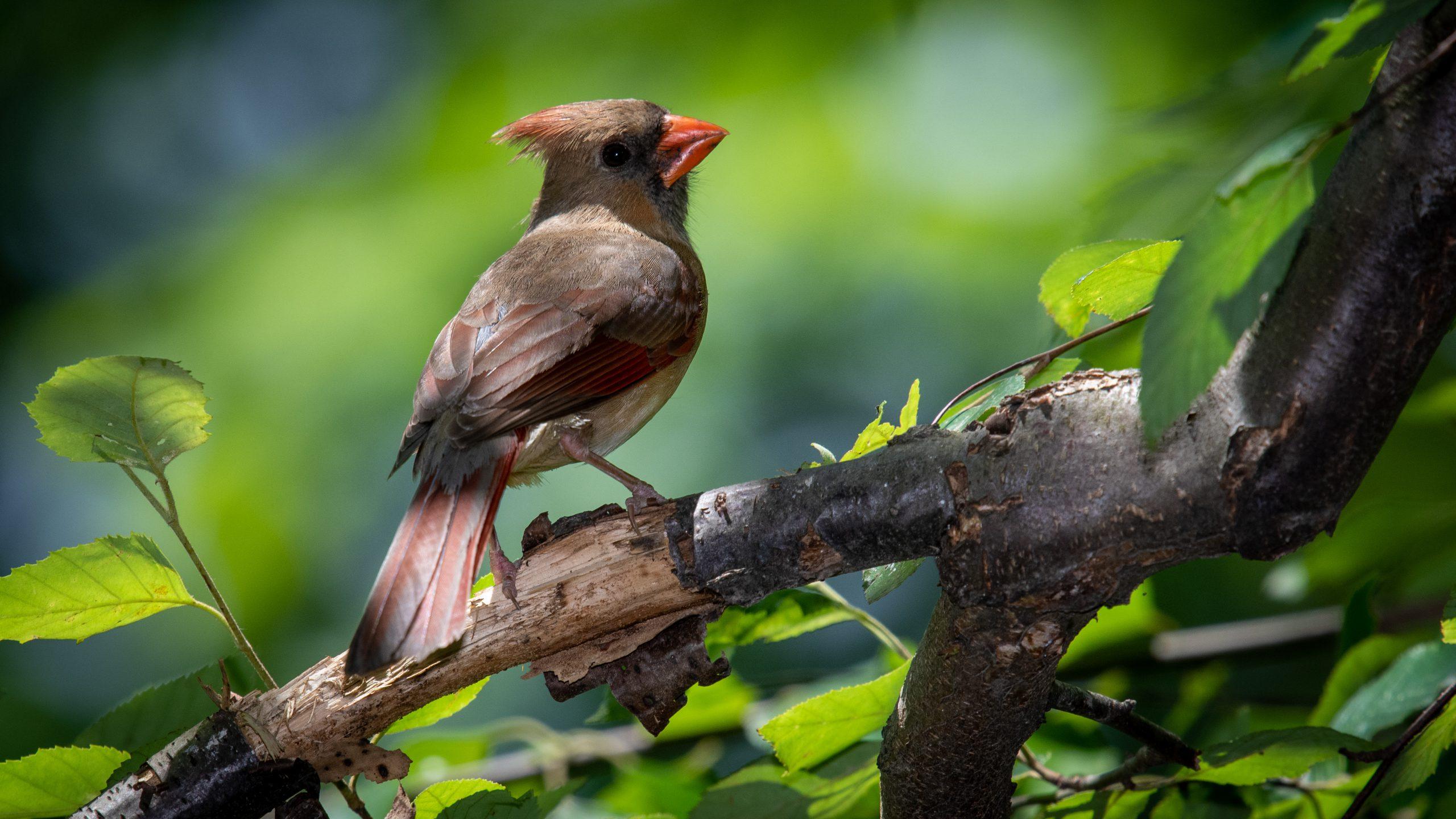 Πουλιά άλλαξαν το «τραγούδι» τους κατά τη διάρκεια του lockdown, σύμφωνα με  έρευνα - bybus.gr